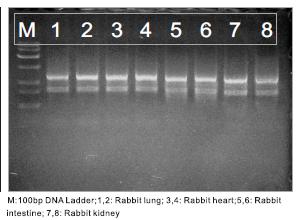 Cells and Tissue RNA Isolation Kit data