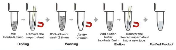 NanoMag DNA Cleanup Kit process