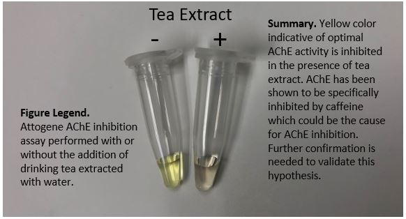 Acetylcholinesterase Inhibition Assay