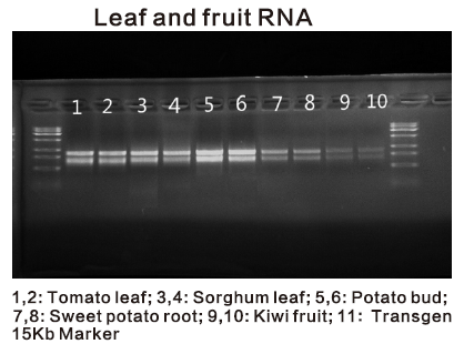 Plant and Algae RNA Isolation Kit data