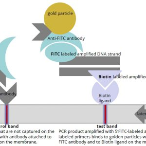 PCRbeam Fast PCR Detection Kit