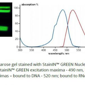 StainIN Green NA Stain image